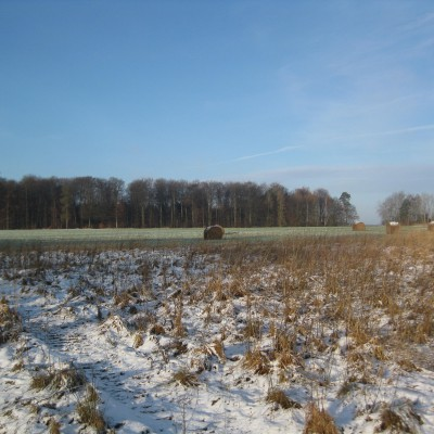 Kammmolchbiotop im Winter