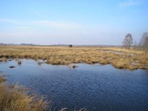Das Oppenweher Moor in Nordrhein-Westfalen