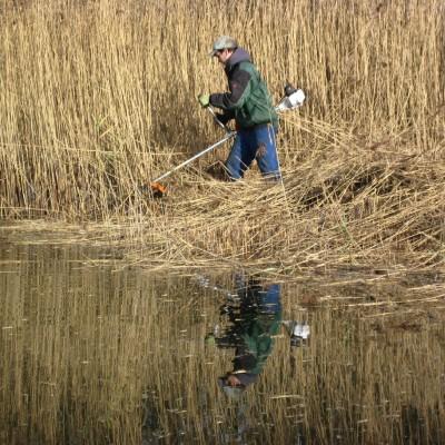 Biotoppflege (Schilfmahd. Ziel war eine Lebensraumverbesserung für kleine Wasser- und Feuchtepflanzen wie z.B. Wassernabel.) (Peter Jacobson)