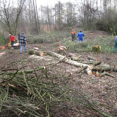 Biotoppflege. Fällen von Birken im Randbereich des Sees. Auf diese Weise soll der Samenanflug auf das NSG langfristig verringert werden. (Peter Jacobson)