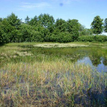 Ein Biotop für den Wasserdrachen