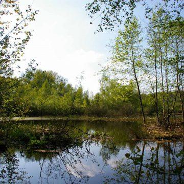 Eine Schlattlandschaft in Syke für den Kammmolch