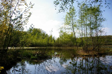 Kammmolchbiotop Syke wird Landschaftsschutzgebiet