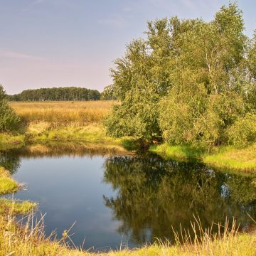 Ein Grenzmoor als europäisches Schutzgebiet