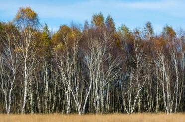 Natura 2000 – EU konforme Sicherung geht weiter