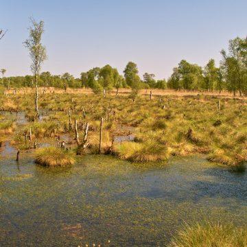 Eine Exkursion in das Oppenweher Moor