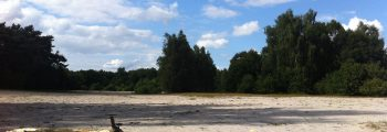 3. August: Steller Heide Exkursion und Information