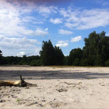 Neues Landschaftsschutzgebiet Steller Heide