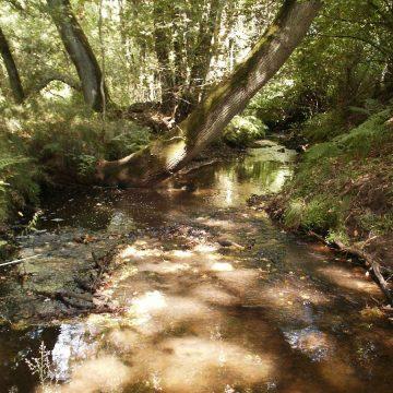 Sicherung der Natura 2000-Gebiete geht weiter