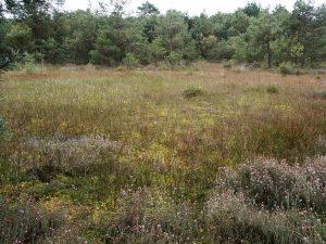 Geestmoor