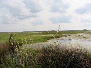 Naturschutzgebiet Steinbrinker Ströhener Masch