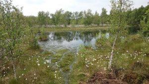 Nährstoffarmes Stillgewässer im Renzeler Moor