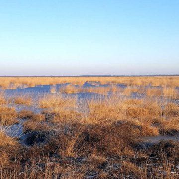 Beginn der öffentlichen Beteiligung für das Diepholzer Moor und das Rehdener Geestmoor